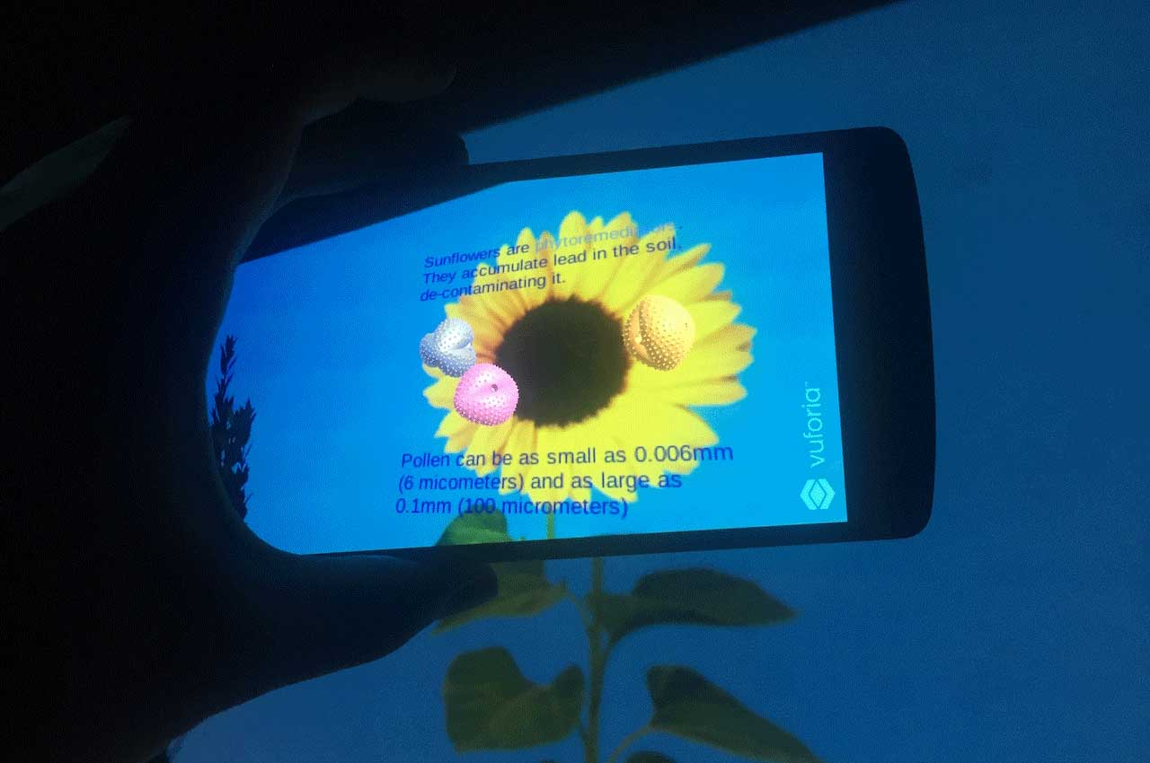 AR app on a smartphone showing pollen on a sunflower